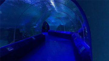 لوحات أكريليك 180 أو 90 درجة لنفق حوض السمك
