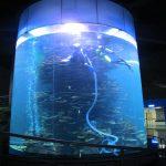 واضح الاكريليك أسطوانة خزان الأسماك الكبيرة لأحواض السمك أو المحيط بارك