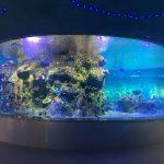 مصنع توريد السلطانيات الأسماك ، وأحواض السمك الزجاج خزان جولة