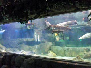 تخصيص تصميم فاخر تحت الماء سميكة ألواح الاكريليك الحوض نافذة زجاج ورقة