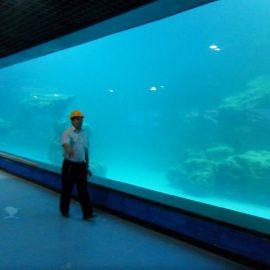 لوحة الجدار الأشعة فوق البنفسجية الاكريليك المصبوب لحوض السمك / oceanarium