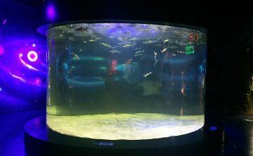 خزان الأسماك الاكريليك