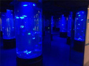 الاكريليك قنديل البحر حوض للأسماك الزجاج